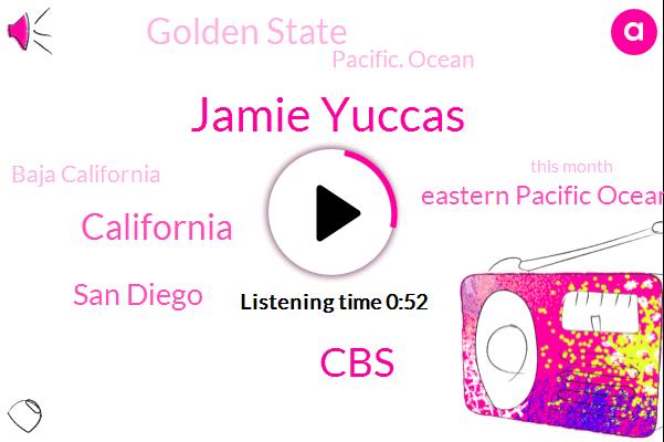 Kevin Sweeney,Pacific Ocean,San Diego,Boston City Hall,Pass Baja California,Jamie Yuccas,Boston,California,Eleven Thousand Dollars
