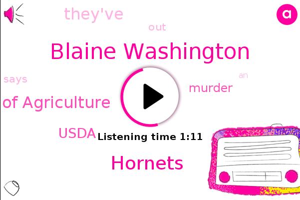 Hornets,Murder,Washington State Department Of Agriculture,Blaine Washington,Usda
