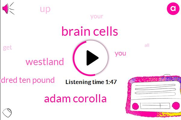 Brain Cells,Adam Corolla,Westland,Hundred Ten Pound