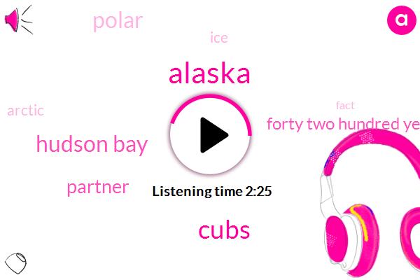 Alaska,Cubs,Hudson Bay,Partner,Forty Two Hundred Years