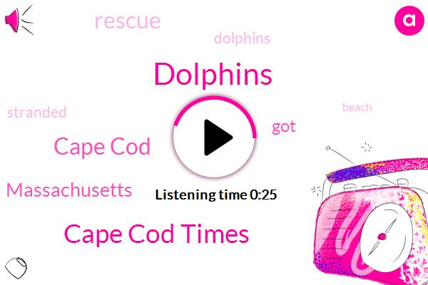Dolphins,Cape Cod,Cape Cod Times,Massachusetts