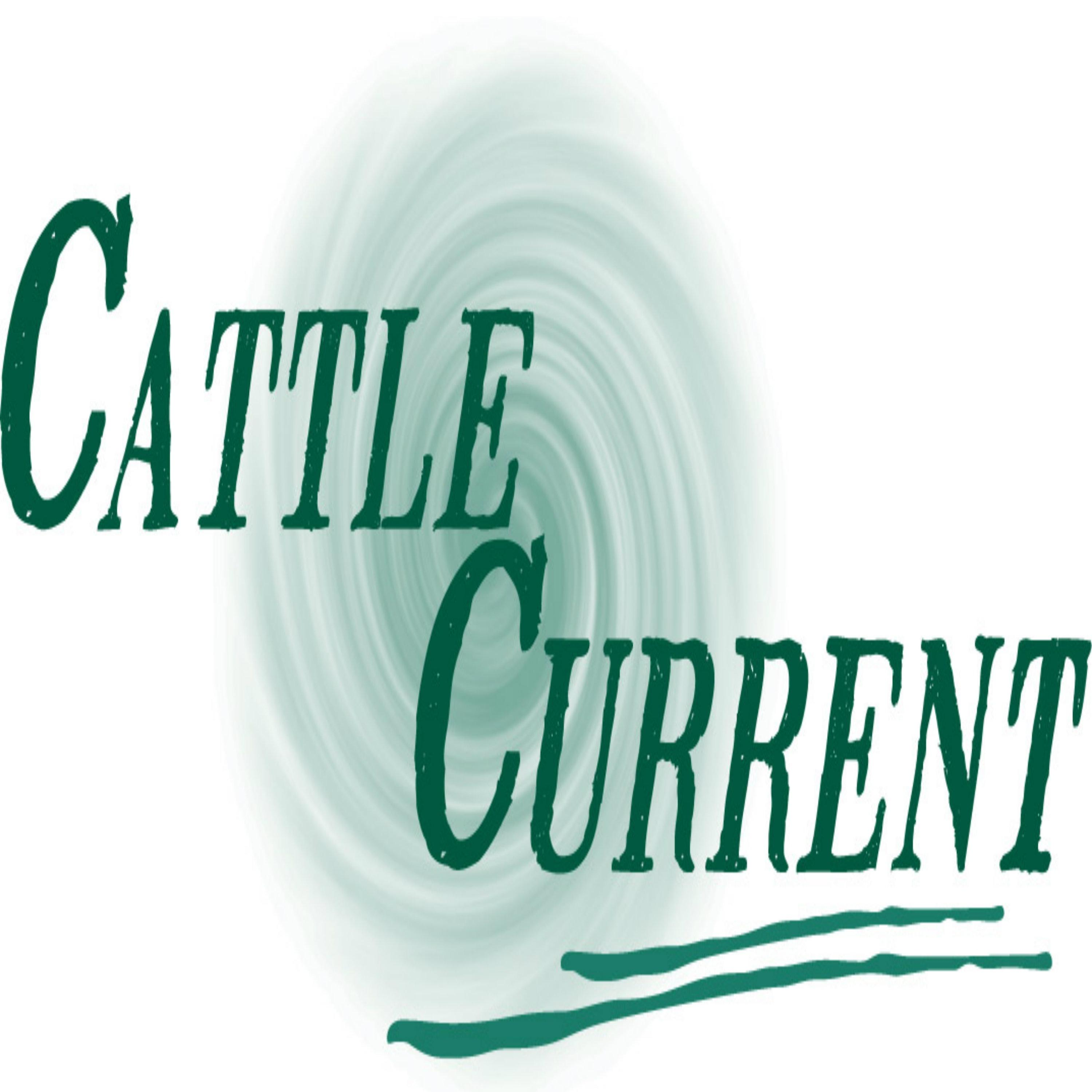 """Fresh update on """" million dollar"""" discussed on Cattle Current Market Update with Wes Ishmael"""